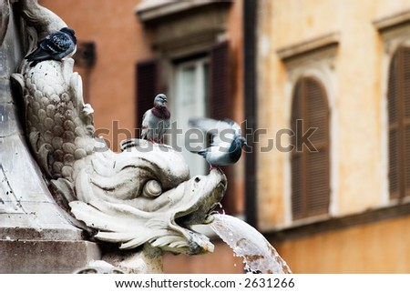 Fountain in Rome, Italy with pigeons
