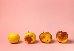 four apples with varying degrees of rot on a pink background, close - up with space. Ugly apples