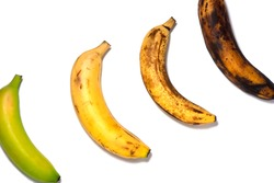 Four bananas - green underripe, ripe, very ripe and over ripe - in diagonal. Banana ripeness. Concept of life cycle, ranging from young to old. White background, isolated.