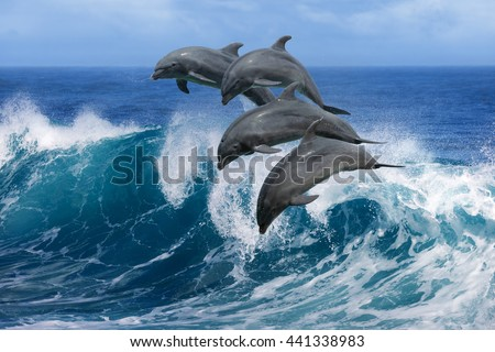 stock photo four beautiful dolphins jumping over breaking waves hawaii pacific ocean wildlife scenery marine 441338983 - Каталог — Фотообои «Животные»