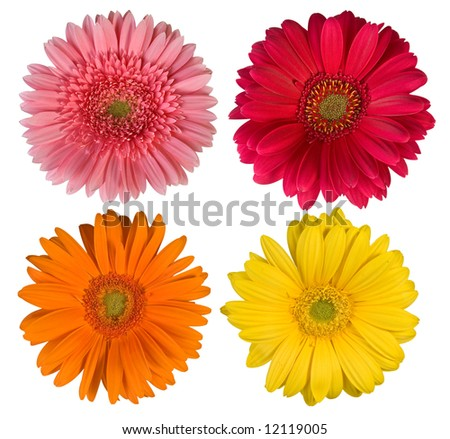 Four beautiful flowers - More flowers in my portfolio!!!!