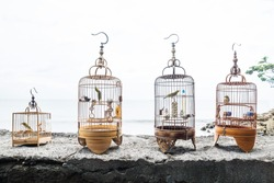 Four bird cages with singing birds on a stone wall for a meeting as a mans hobby in Sanur, Bali, Indonesia