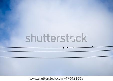 Four birds on erectric line #496421665