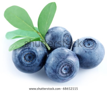 Four blueberries on a white background.