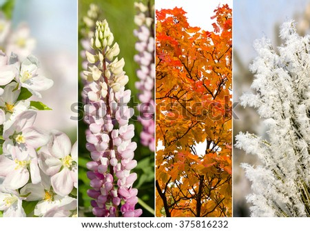 Four bright seasons - spring, summer, autumn, winter. #375816232