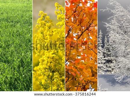 Four bright seasons - spring, summer, autumn, winter. - Shutterstock ID 375816244