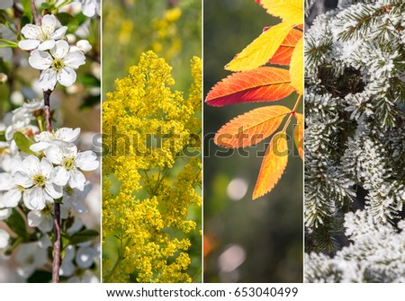 Four bright seasons - spring, summer, autumn, winter. #653040499