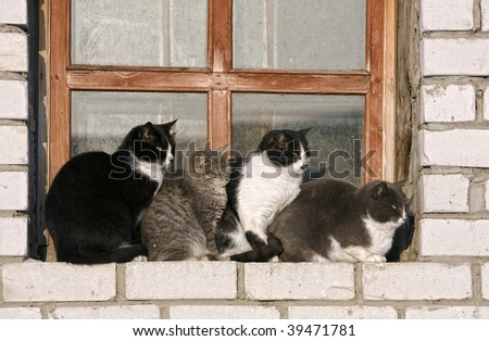 Four cats of different breed sit on a window sill is close to each other