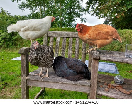 Four Chickens Perched On A Seat