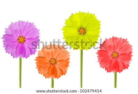 four color flowers isolated on white background