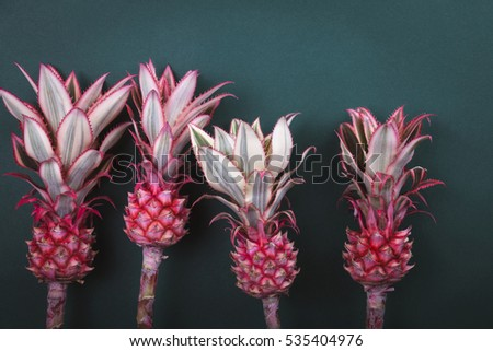 Four colorful  pink pineapple on green background . Family concept #535404976