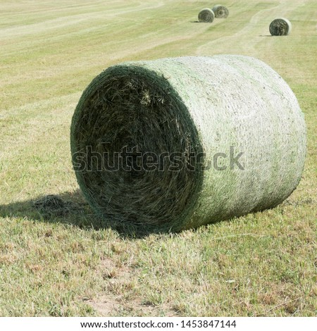 Four compressed rounded silage bales bounded in a round bale net on a green meadow. The silage bales are lying between traces of the baler with focus on one round bale in the front of the picture. #1453847144