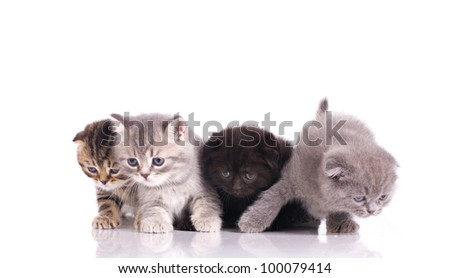 four curious  kittens  isolated on white