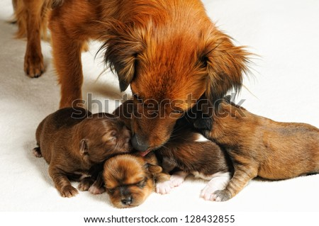 four cute blind puppies and mom over white