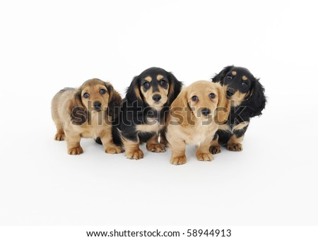 four dogs - stock photo