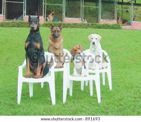 Four dogs at dog school