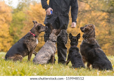 four dogs in training