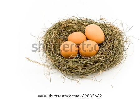 Four Eggs in Nest isolated on white