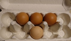 Four Eggs Laid Out Symmetrically in a Ten Egg Cardboard Pulp Carton Close Up from Above