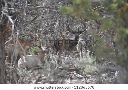 Four Fallow Deer Bucks in Trees