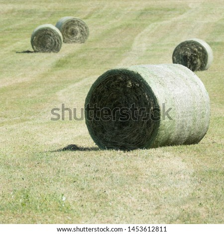 Four fresh compressed hay bales wrapped in a net on a green meadow. They hay bales are lying between traces of the baler with focus on one round bale in the front of the picture. #1453612811
