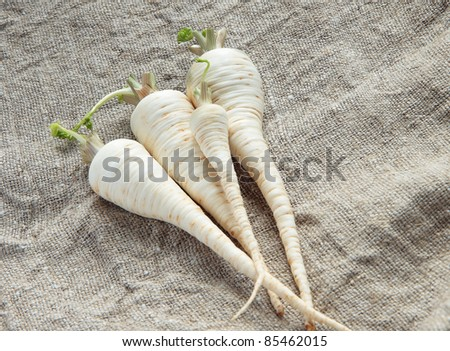 Four fresh parsley root on the gray canvas - stock photo