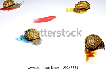 Four garden snails doing painting  on a white background. - stock photo