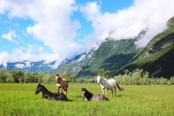 Four horses of different colors: white, gray, brown and black graze among the Altai mountains