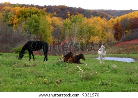 Four horses together in a beautiful autumn wooded pasture.