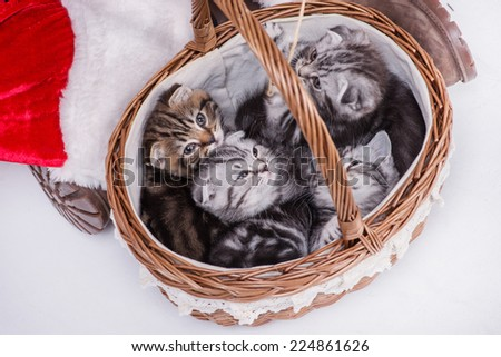 Four kitten look out of Christmas Santa\'s basket until a Santa Claus holding a gift basket with kittens on Christmas Eve on an isolated white background