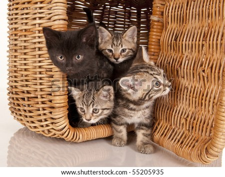 four 4 kittens in a picnic basket