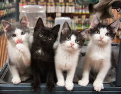 Four Kittens in Cage Pet Store Cat Black White Grey Sitting Cute Portrait Kitten Cats Pet Pets Funny