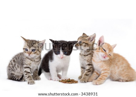 four kittens sits behind a dry food.