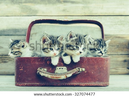Four kittens sitting in a vintage suitcase on wooden background