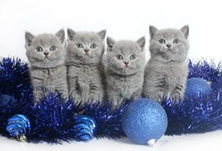 Four kittens with Christmas balls on a white background.