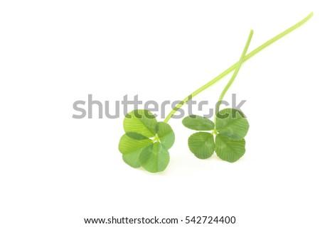 Four leaf clover #542724400