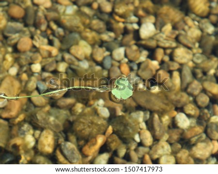 four-leaf clover floating on the water #1507417973