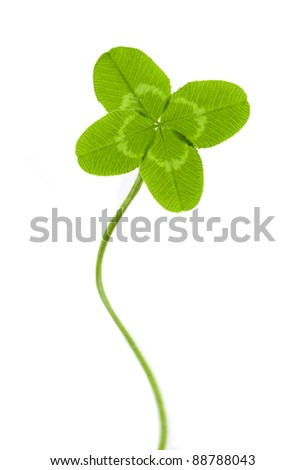 four-leaf clover for good luck