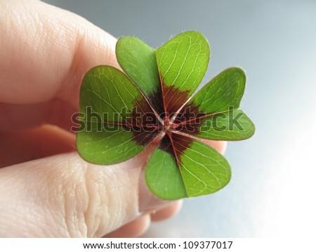 Four Leaf Clover/Good luck!