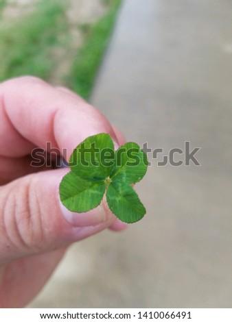 four leaf clover, green, lucky  #1410066491