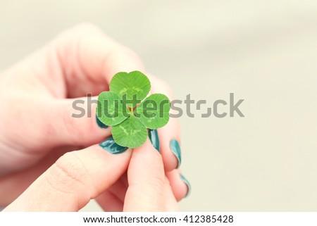 Four leaf clover in female hands closeup #412385428