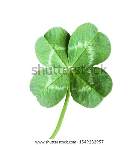 Four leaf Clover isolated on white background #1549232957