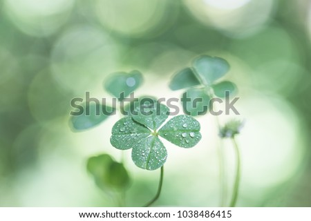 Four-leaf clover with drops #1038486415