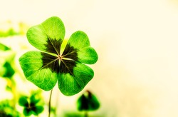 Four Leaf Clover with free space for text