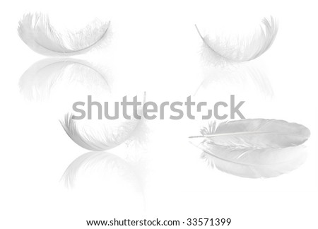 four light feathers with reflections isolated on white background