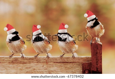 four little black-capped chickadees  perch on a bench wearing their santa hats
