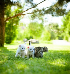 Four little kitten walking on the green grass