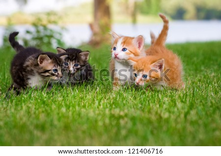Four little kittens playing in garden together
