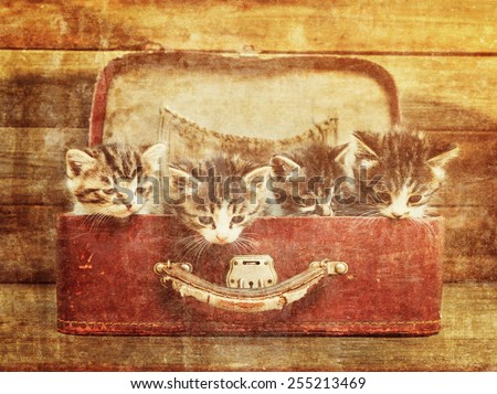 Four little kittens sitting in vintage suitcase on wooden background. Image with sunlight effect. Vintage image