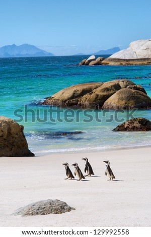Four little penguins on beautiful beach. Shot in the Boulders Beach Nature Reserve, near Cape Town, Western Cape, South Africa.